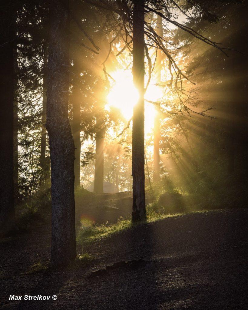 рассвет в финском лесу
