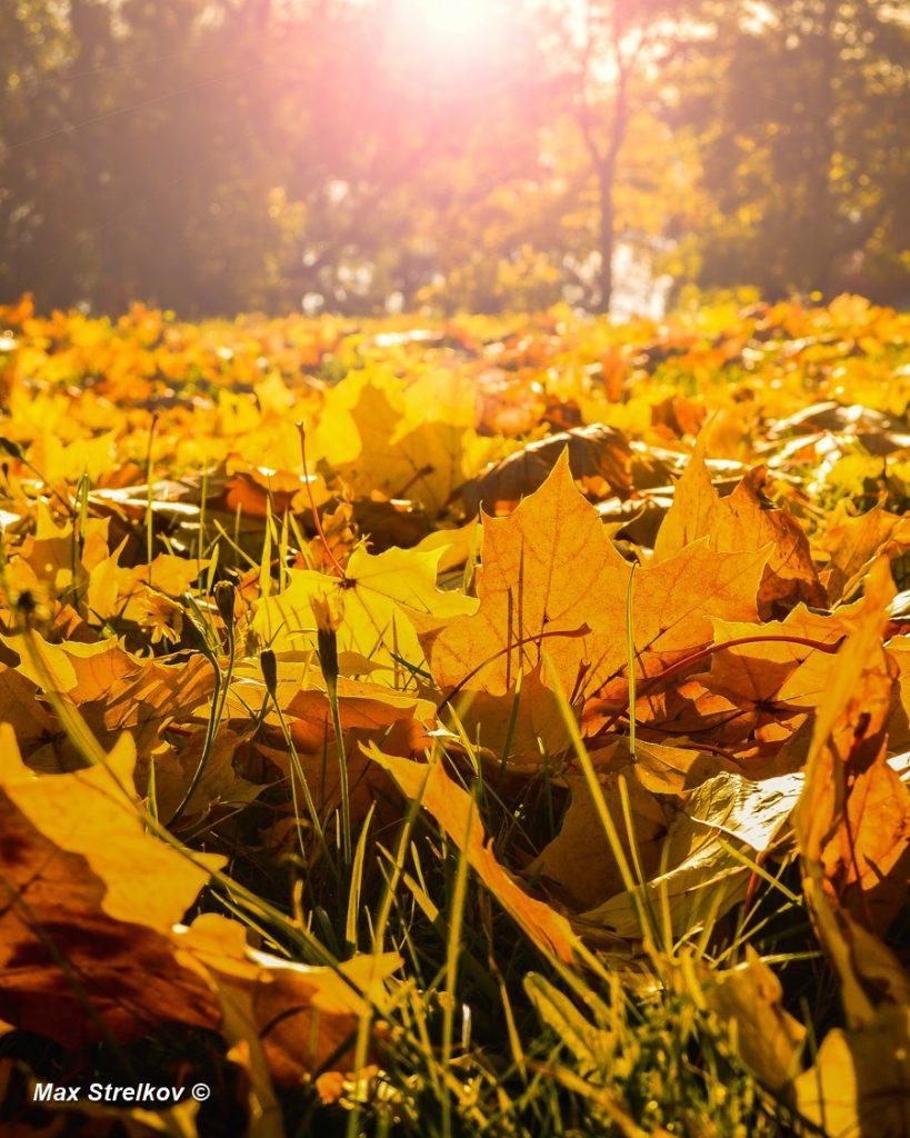краски финской осени
