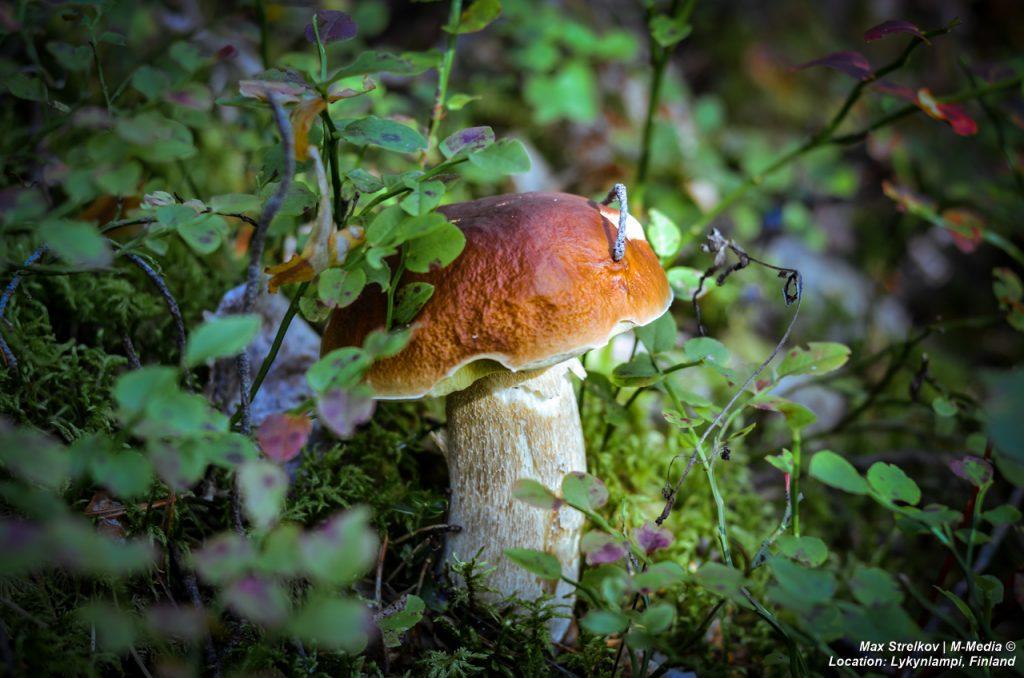 Финское грибное шоу